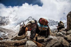 Himalaya-4
